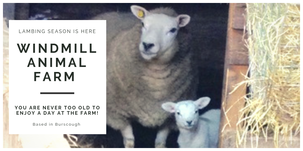 Lambing Season at Windmill Animal Farm