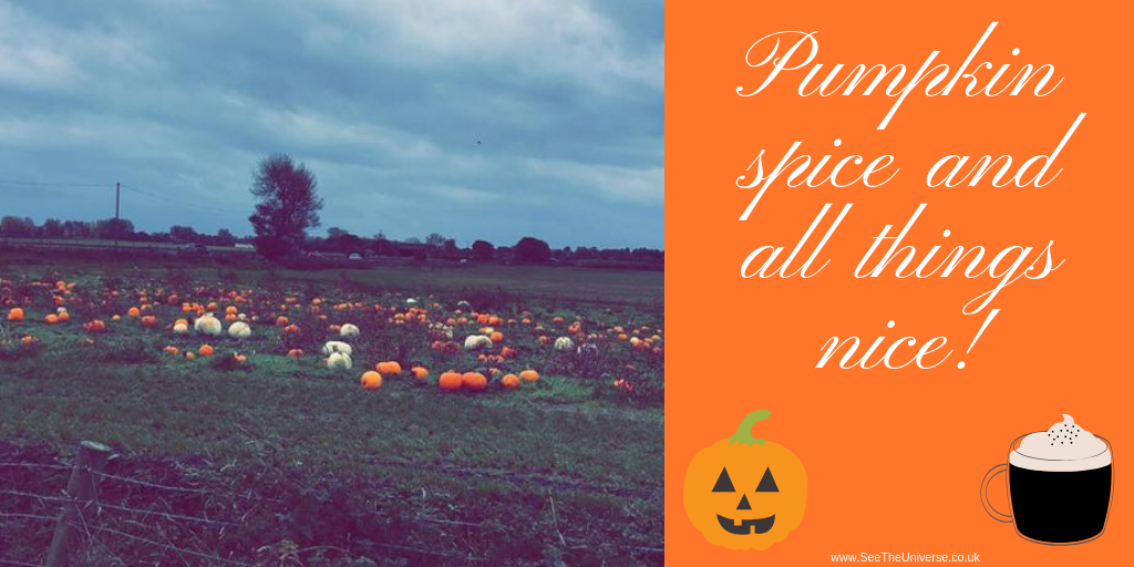 Pumpkin Picking at Windmill Animal Farm!