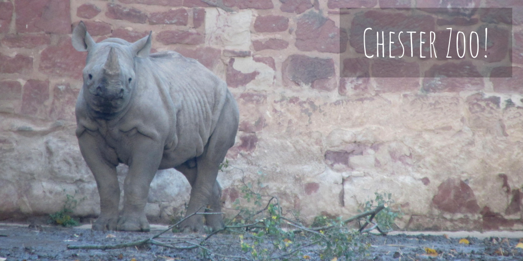 Our Trip To Chester Zoo!